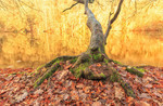 SI-W2204_showcase-tree-herfst